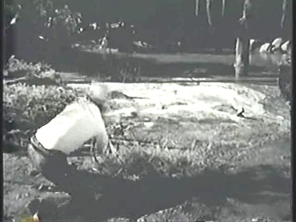 Image Name - swamp1.jpg